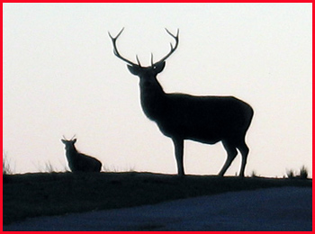 A stag observes us from a distance whilst we wait for Julie and Dave to return from Foinavon