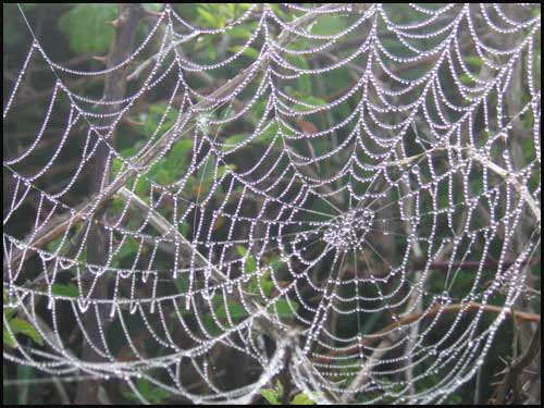Spiders web in Pembroke